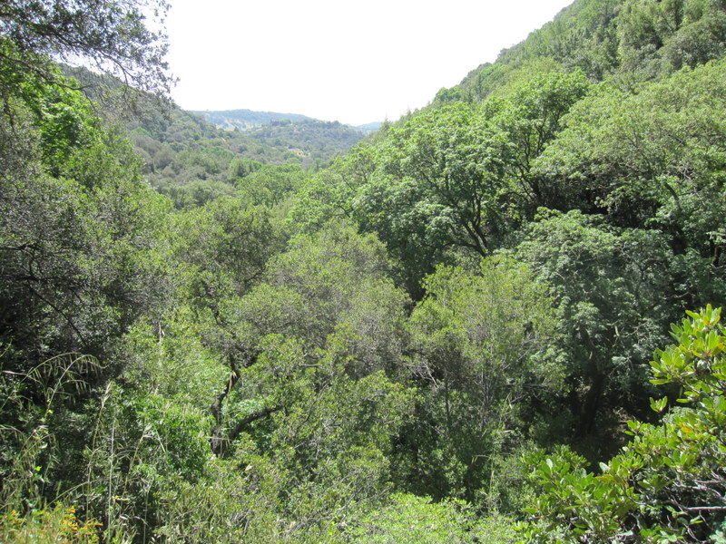 shc-green-valley-falls-5-7-11-065