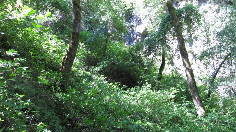green-valley-falls-6-12-10-044