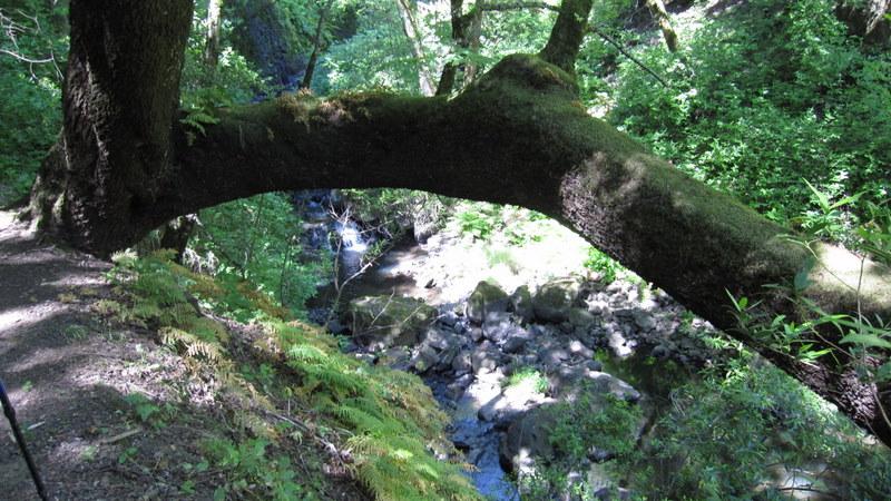 green-valley-falls-6-12-10-083