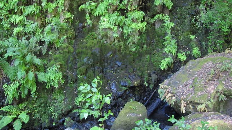 green-valley-falls-6-12-10-098