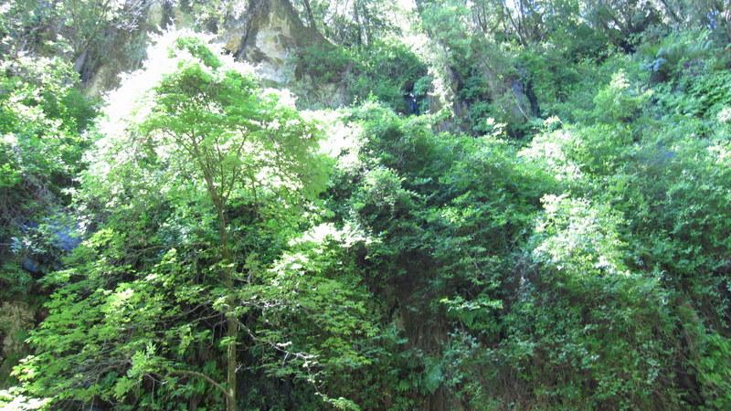 green-valley-falls-6-12-10-122