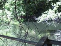 green-valley-falls-6-12-10-074