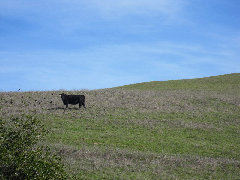 hiddenbrook-bay-ridge-trail-2-11-11-006