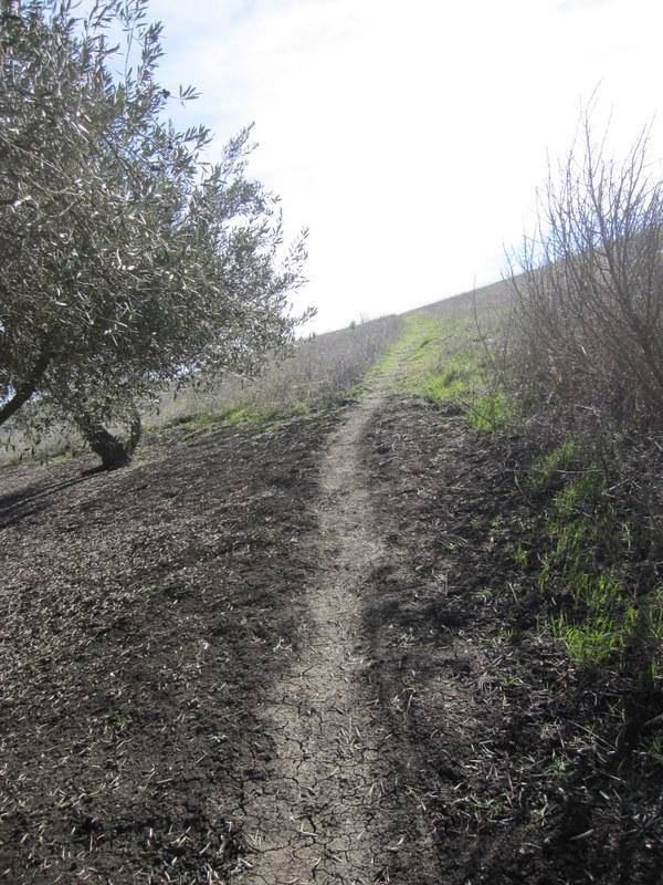hiddenbrook-bay-ridge-trail-2-11-11-010