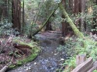 muir-woods-3-27-10-005