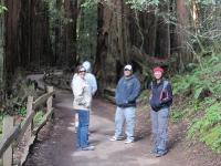 muir-woods-3-27-10-007