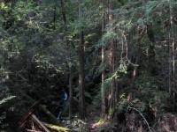 muir-woods-3-27-10-017