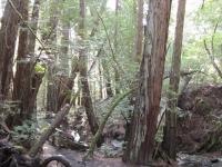 muir-woods-3-27-10-018