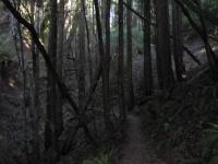 muir-woods-3-27-10-020