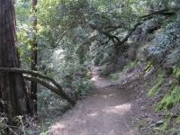 muir-woods-3-27-10-021_0