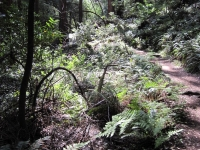 muir-woods-3-27-10-022