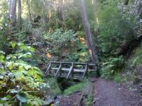 muir-woods-bootjack-trail-022