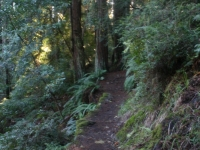 muir-woods-bootjack-trail-031