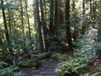 muir-woods-bootjack-trail-034-1