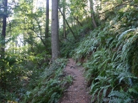 muir-woods-bootjack-trail-043