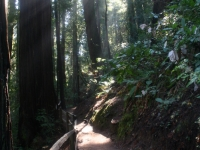 muir-woods-bootjack-trail-070-1