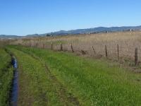 rush-ranch-3-13-10-010