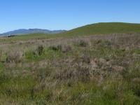 rush-ranch-3-13-10-016