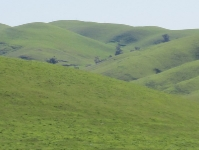 rush-ranch-3-13-10-034